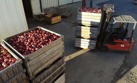 Les Français à la recherche de nouveaux marchés pour exporter leurs pommes - La Croix   Le Fil @gricole   Scoop.it