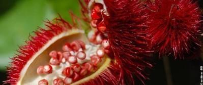 Un Office pour la biodiversité floristique | Guyaweb | Espaces naturels littoraux | Scoop.it