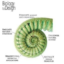 on Biomimicry   Interalia Magazine   Biology   Scoop.it
