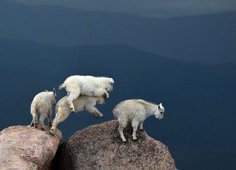 The week in wildlife – in pictures | Biodiversité | Scoop.it
