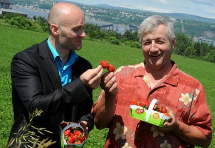 Une superfraise pour contrer le diabète? | Actualité de l'Industrie Agroalimentaire | agro-media.fr | Scoop.it