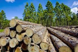 Forestry industry out on a limb   Australian Forests   Scoop.it