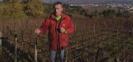 Amende requise contre le viticulteur bio qui refuse les pesticides | agro-media.fr | Actualité de l'Industrie Agroalimentaire | agro-media.fr | Scoop.it
