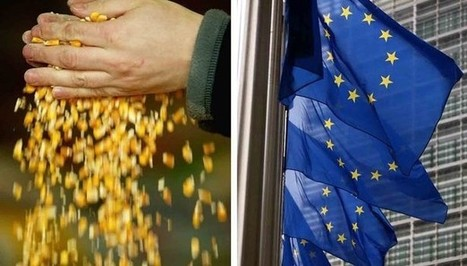 Wales To Ban Genetically Modified Crops | Your News Wire | Global Milling | Scoop.it