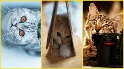 15 immagini con tema i Gatti   my blog   Scoop.it
