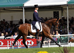 Dressage Classic Fills Classes Beyond Capacity for Florida Meet | Dyr, animals, behaviour and training | Scoop.it
