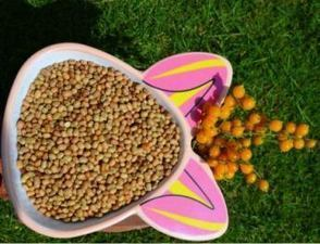 Cereal manufacturers in India, Horse gram suppliers in India, Yellow toor dal manufacturers in Tamilnadu India, Urad dal suppliers, Moong dal manufacturers in India, | Agricultural food product manufacturers | Scoop.it