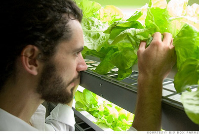 Urban farming 2.0: High tech replacements for sun and soil - Dec. 23, 2010 | Growing Food | Scoop.it