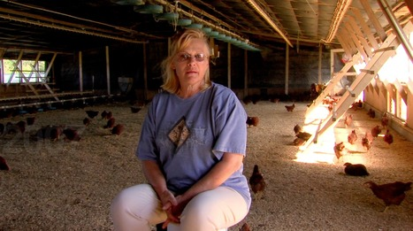 FIX FOOD | Features | Food Inc's Carole Morison is Free as a Bird | Annie Haven | Haven Brand | Scoop.it