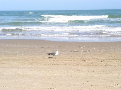 How do Beaches Form?   Texas Coast Living   Scoop.it