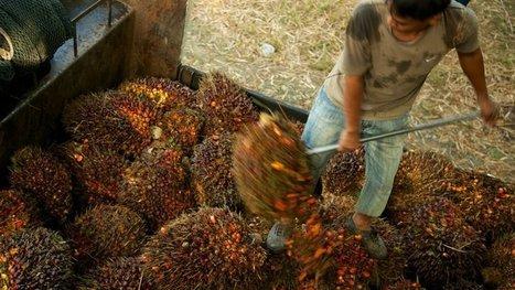 La taxe sur l'huile de palme débarque en France | Des 4 coins du monde | Scoop.it