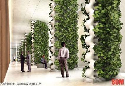 En desarrollo una pared verde para purificar el aire   Horticultura Efectiva   Cultivos Hidropónicos   Scoop.it