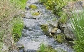Rigidité? Exigence, recherche d'un idéal...La fleur de Bach Rock Water | Santé naturelle | Scoop.it