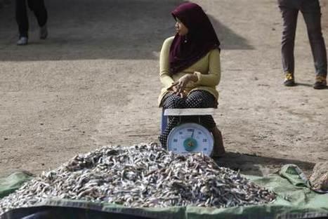 Women underpaid, or unpaid, in $500 billion fishing industry - U.N.   Humanitarian emergencies   Scoop.it