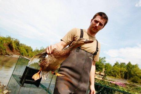 Une cabane spéciale canards   chasse   Scoop.it