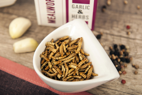 This new business is bringing the nutritional value of edible insects to the British public | Business Advice | Entomophagy: Edible Insects and the Future of Food | Scoop.it
