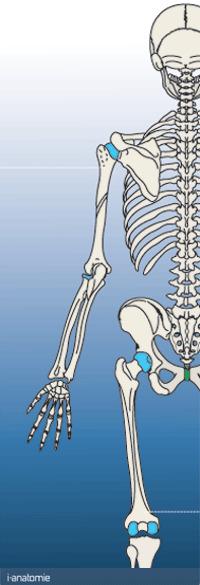 CONCEPT D'ANATOMIE INFORMATIQUE MULTIMEDIA COURS ANATOMIE EN LIGNE PCEM1 PCEM2 DCEM1 | Anatomie | Scoop.it