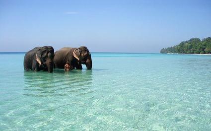 Honeymoon Destination at India | Cozy Resort | Best Destination | Cozy Resort | Scoop.it