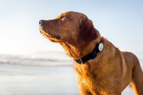 [Video] A Wearable device for your Dog to track his Activities | YouMobile | Scoop.it
