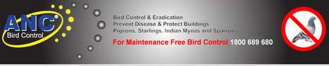 ANC Bird Control Website | Bird Control Melbourne | Scoop.it