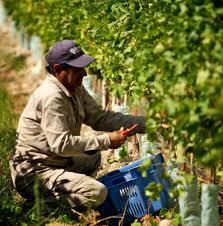 From vine to wine   SevenWines   Scoop.it