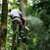 Emergency Tree Service Co