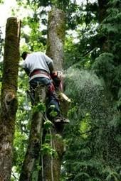 Emergency Tree Service Co offers stump grinding in Roswell, GA | Emergency Tree Service Co | Scoop.it