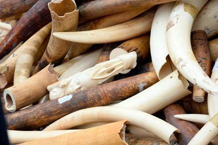 US bans commercial ivory trade   GarryRogers NatCon News   Scoop.it