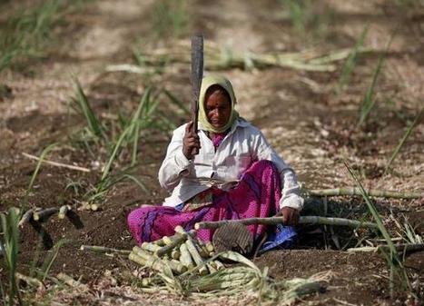 Food imports rise as Modi struggles to revive rural India - Reuters (2016) | Food Policy | Scoop.it