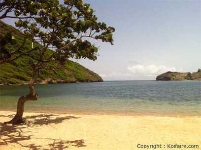 Les plus belles plages de Guadeloupe   Découvertes et voyages   Scoop.it