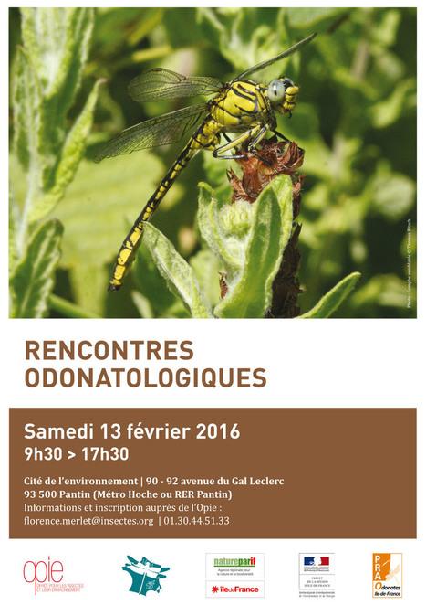 Rencontres odonatologiques 2016   Variétés entomologiques   Scoop.it