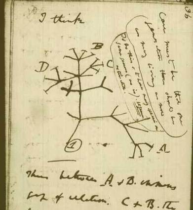 Evolution: Charles Darwin was wrong about the tree of life | Interesting science | Scoop.it