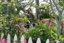 Butterfly Gardening With Manure Tea | OWB Flutter-Blog | Annie Haven | Haven Brand | Scoop.it