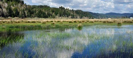 Restoration Makes Dollars and Cents | McKenzie River Trust | Fish Habitat | Scoop.it