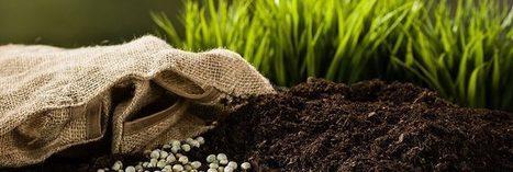 Un Kényan crée un engrais enrichi et écologique à partir de déchets de récoltes | Afrique: développement durable et environnement | Scoop.it
