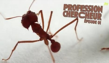 Audrey Dussutour, spécialiste des fourmis   EntomoScience   Scoop.it