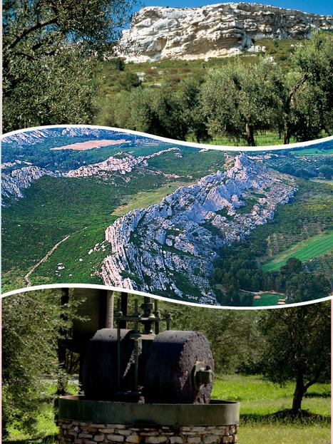 Un jour un village... Mouriès et l'or jaune | Tourisme en Provence Pays d'Arles | Scoop.it