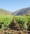 Saint-Julien-en-Saint-Alban veut valoriser son vignoble | Le vin quotidien | Scoop.it