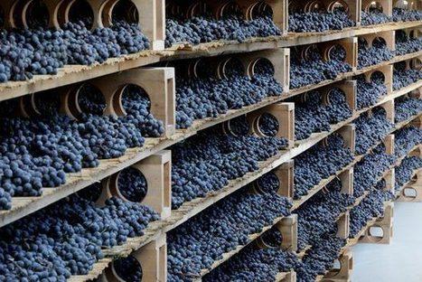 Hidden treasures: Wines from Valtellina | Gastronomy & Wines | Scoop.it