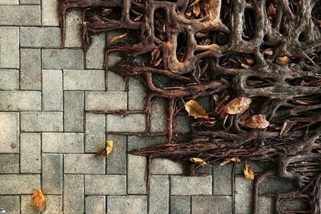 Деревья с мощными корнями: необычное явление по всему миру   Amuze   Scoop.it