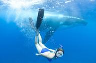 Les baleines parlent aux humains   spiritualité, médiumnite, parapsychologie   Scoop.it