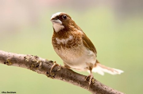 How To Make Your Glass Windows Bird Proof; My Spy Birdhouses | Global Animal | MySpy Birdhouse | Scoop.it