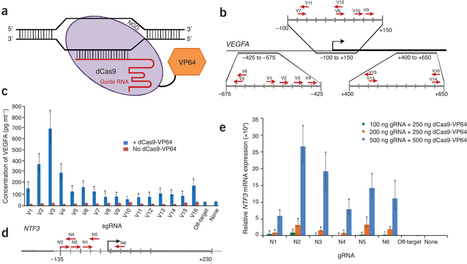 CRISPR RNA–guided activation of endogenous human genes | CRISPR-Cas System for Eukaryotic Genome Engineering | Scoop.it