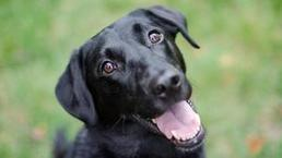 Dogs can tell if you're untrustworthy - BBC News | Dog Lovers | Scoop.it
