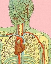 The Human Body—In 'Google Map' Form | Australian e-health | Scoop.it