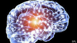 Trabajan en la simulación computarizada del cerebro | Blog Informativo de ProfesionalesPanama | Neuroeducacion | Scoop.it
