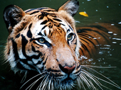 The United Nations: Make Poaching of Endangered Animals an Internationally Punishable Crime. | Life on Earth | Scoop.it