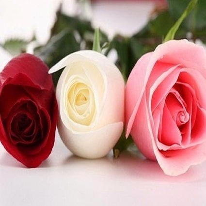 Send Fresh Flowers to Delhi | Online Flower Delivery in India | Scoop.it