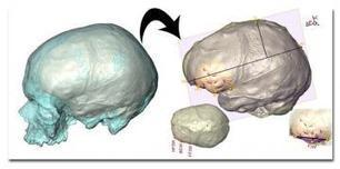 2. Comment a évolué notre cerveau ? - RFI | Psycho-Santé | Scoop.it