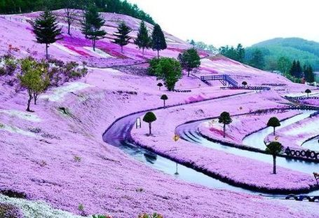 The Breathtaking Flower Hill of Hokkaido | Share Some Love Today | Scoop.it